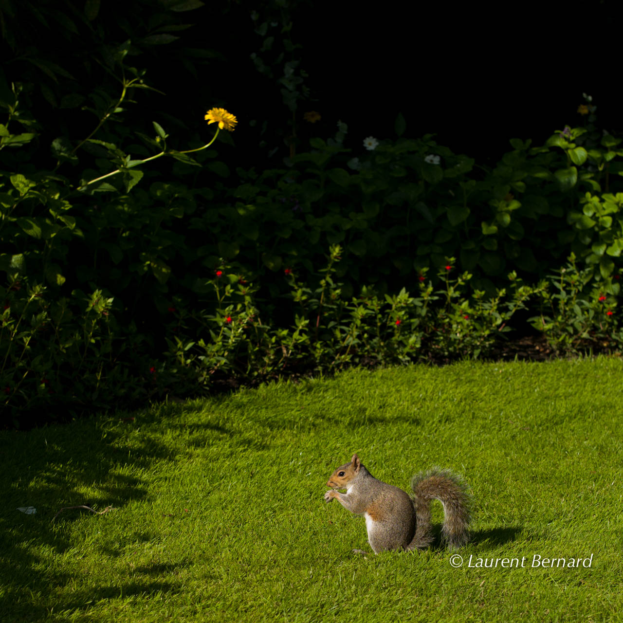 SquirrelHydePark