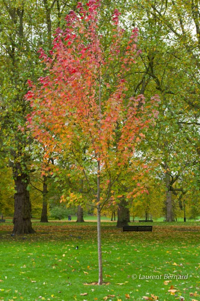 Autumn colors in Hyde Park